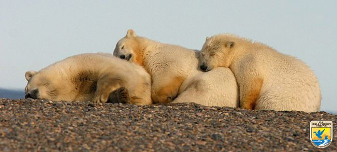 bears-hugging